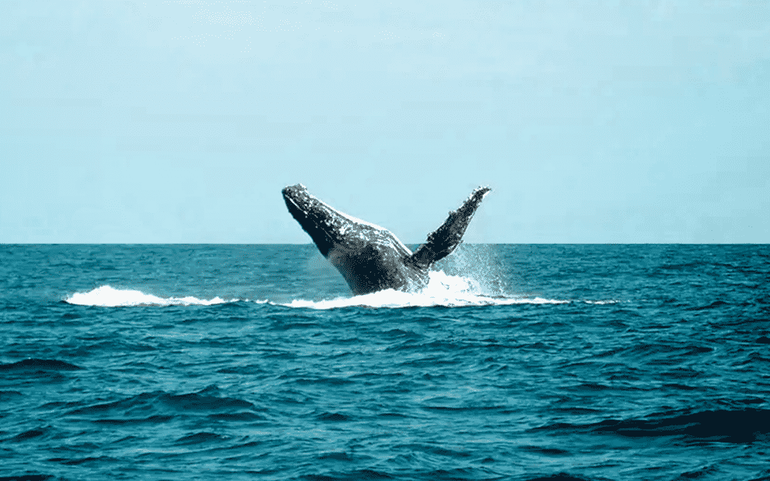 The Whale Migration
